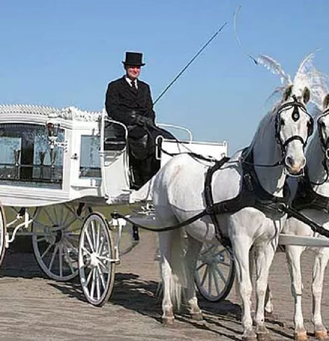 Our team of white hearse and horses is a graceful and elegant final salute, a testament of beauty and peace